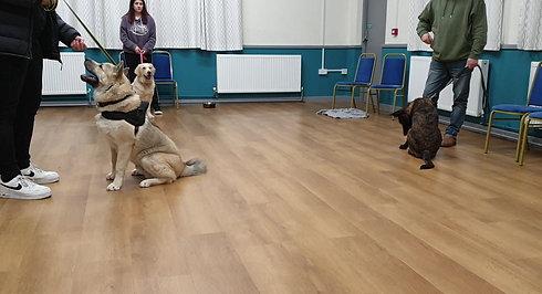 Mixed dog training recall