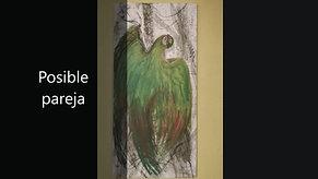 Guacamayas de Raúl Herrera