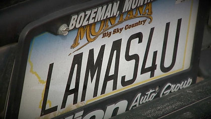 """Lewis The Llama Surgery"""