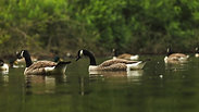 Wanstead Park Birds