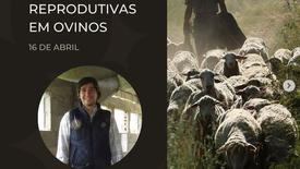 Biotecnologias Reprodutivas em Ovinos - Dr. Luís Miguel Miranda