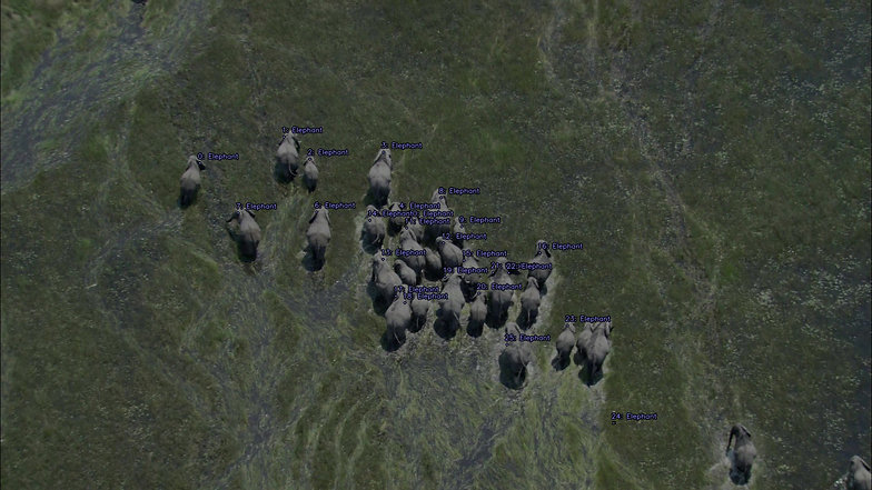 ObjectTracker-ElephantSS