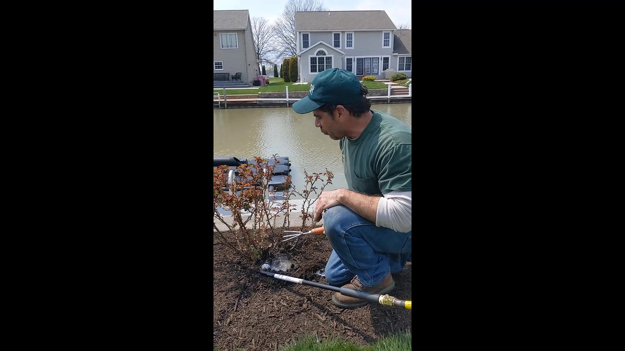 Caring for Your New Planting