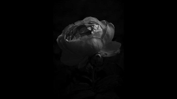 「薔薇」BGV