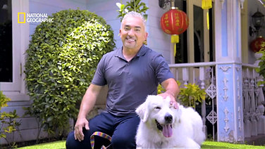 Chinese New Year Ident with Cesar Milan