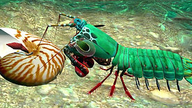 How the Mantis Shrimp's Powerful Punch Inspired Stronger Materials – Biomimicry Institute