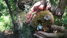 Rencontre sensitive en forêt de Montmorency