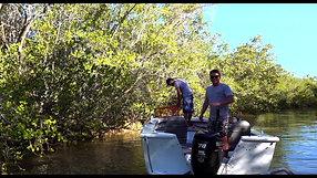 Ep3. Beers, Crocs & Crabbing in the Albert River