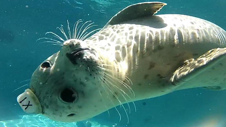 The Marine Mammal Center Videos