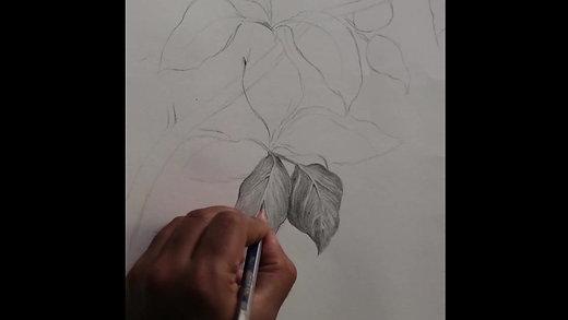 Foliage Study