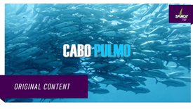 Cabo Pulmo  - Official Trailer