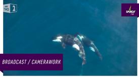 WILD WEST - ORCAS HUNTING  MOBULAS