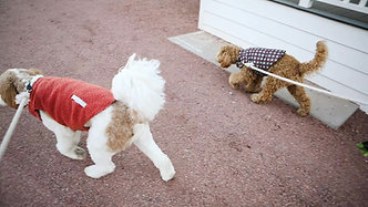 Dog Fun at The Strawberry Inn