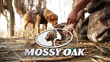Mossy Oak Kennels  Timbo