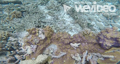 2019 Coral Bleaching