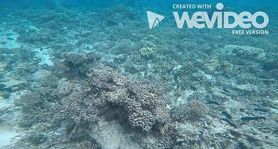 1000 Square Feet of Coral Bleaching 2019