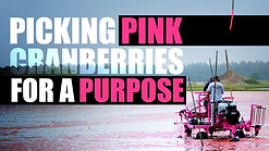 Ocean Spray PINK Harvest - Picking Pink Cranberries for a Purpose