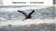 Separation Livestream