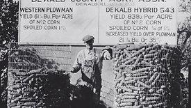 DeKalb Hybrid Corn Breeding Plot