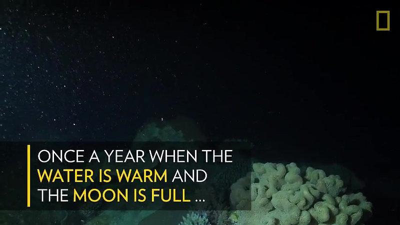 See 'Underwater Snowstorm' of Coral Reefs