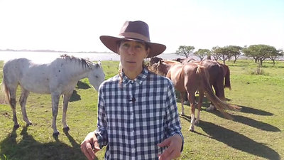 Taller con caballos