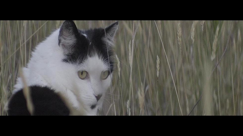 My garden - anamorphic short film example