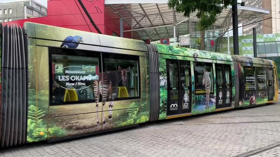 Tram du Parc Zoologique et botanique de Mulhouse