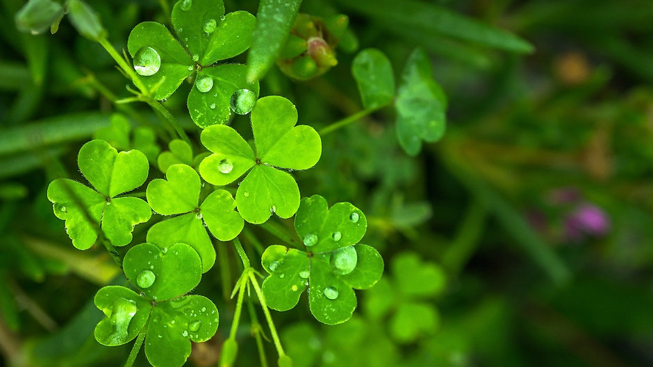 Shifting into Luck, Synchronicity and Flow