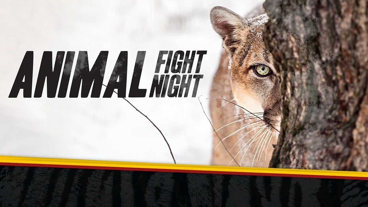 Animal Fight Night 3 - Nat Geo