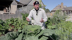 Whats growing at Colonial Michilimackinac