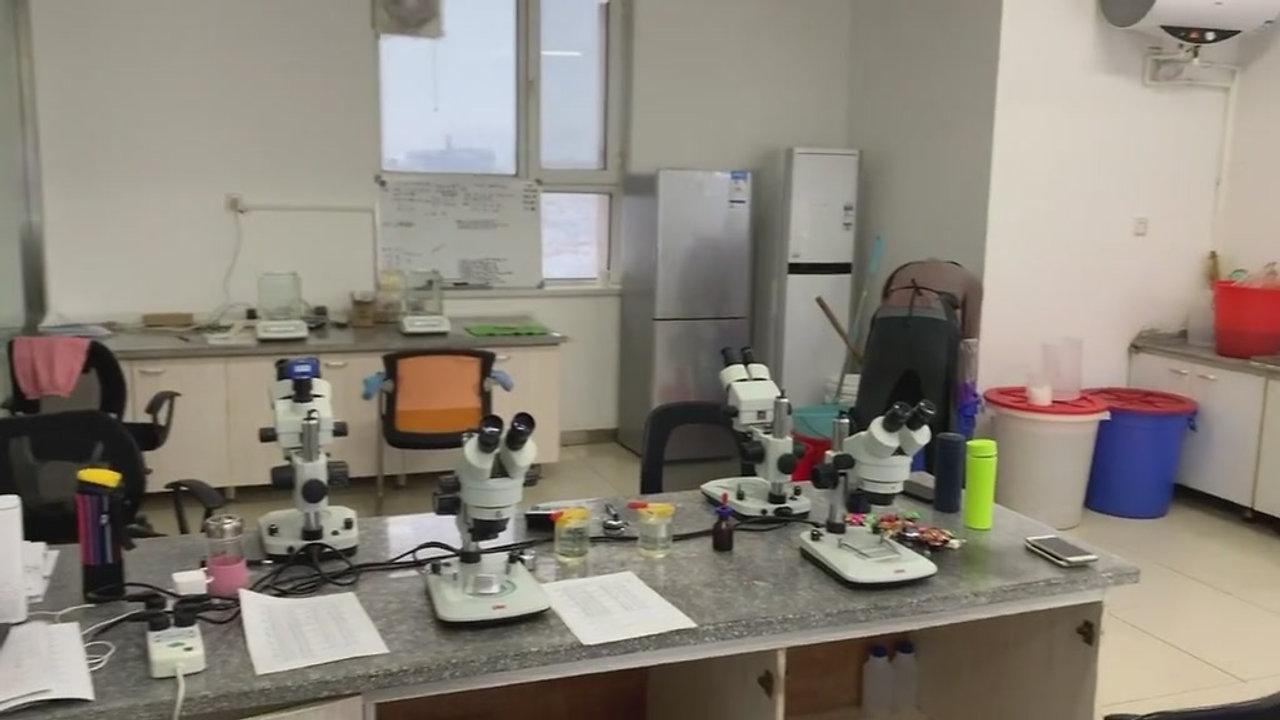 Artemia Cysts Lab