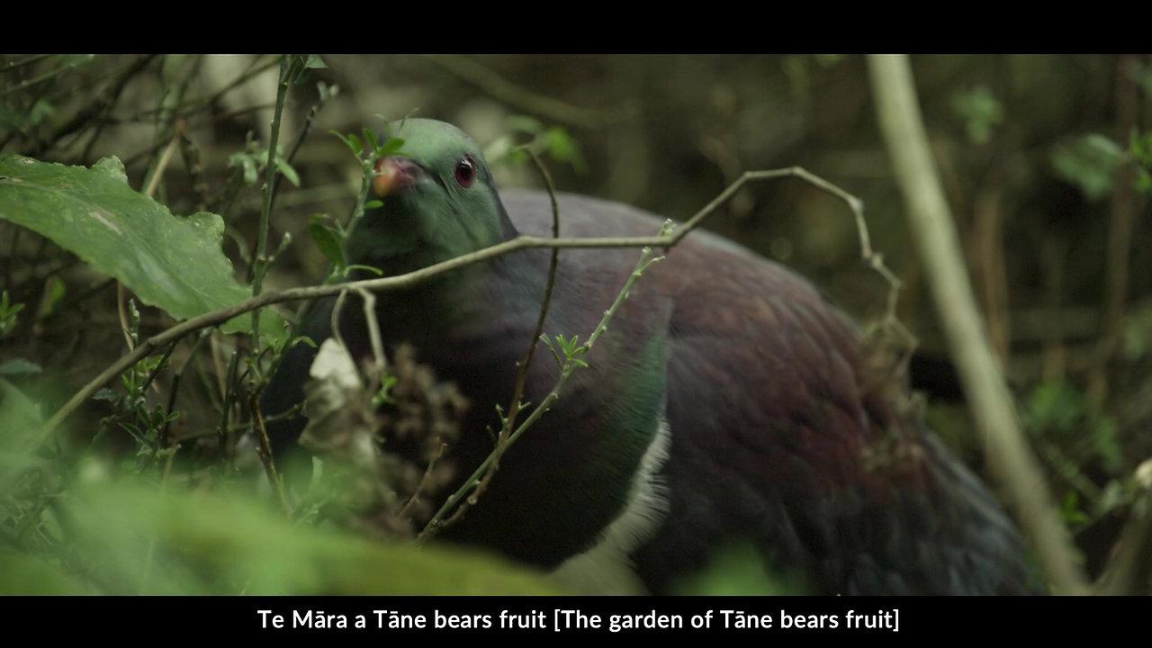 Zealandia Ecosanctuary Story