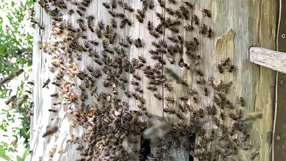 The beauty of a swarm