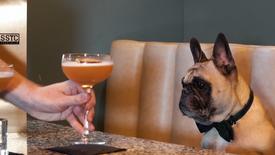 Dog Friendly Coffee & Cocktail Bar Promo