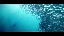 Cebu Nemo