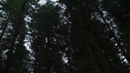 Klip 6 fra filmen: Erlend i skoven