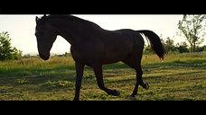 Swift Photo - Equine Video - Lily & Apollo