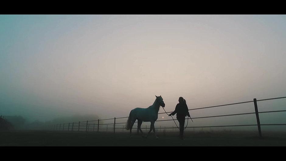 Swift Photo - Equine Video