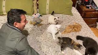 Gatitos divitiéndose