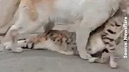 ce chat errant refuse d'abandonner derrière lui son compagnon décédé