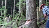 Right Away cutting for new logging road