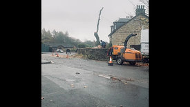 Timelapse roadside ash tree removal