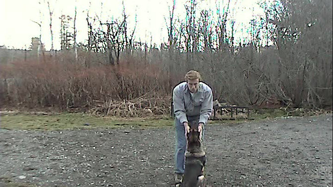 Tung Obedience