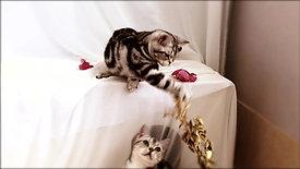 Gatos fofos 1