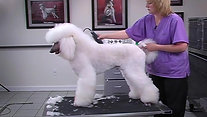POODLE GROOMING mp4
