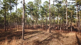 Southeastern Land Group Property Showcase