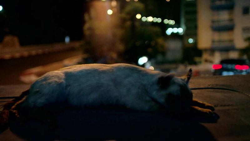 Jaguar 3am - Henry Alex Rubin