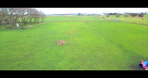 Field Drone view