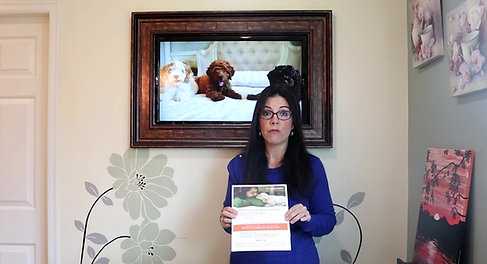 Chilliwack Labradoodles Puppy Pick-up video for families