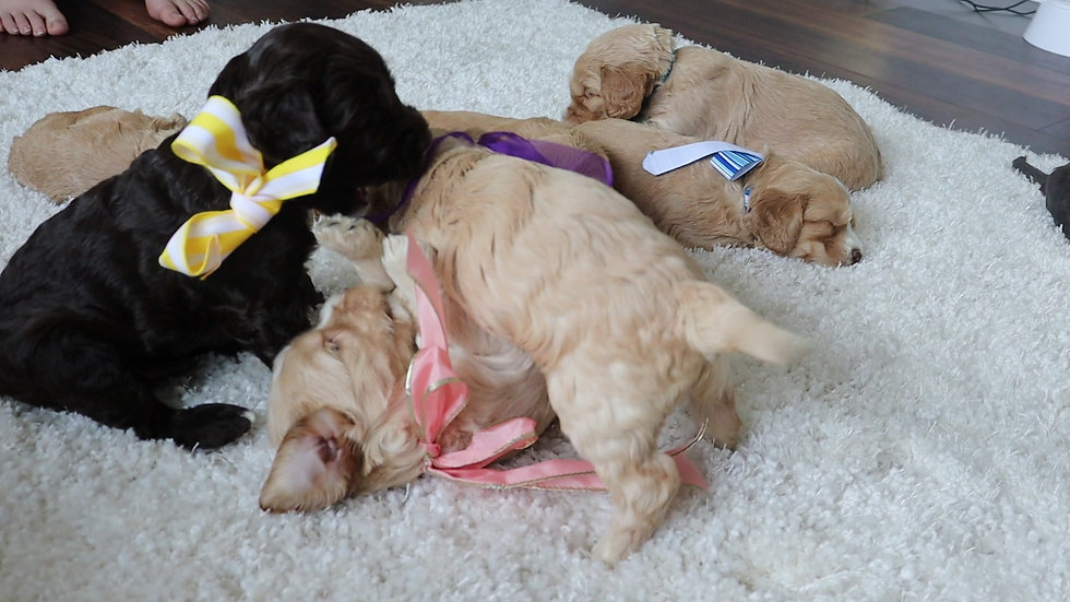 Week 4 Surprise Parti Litter